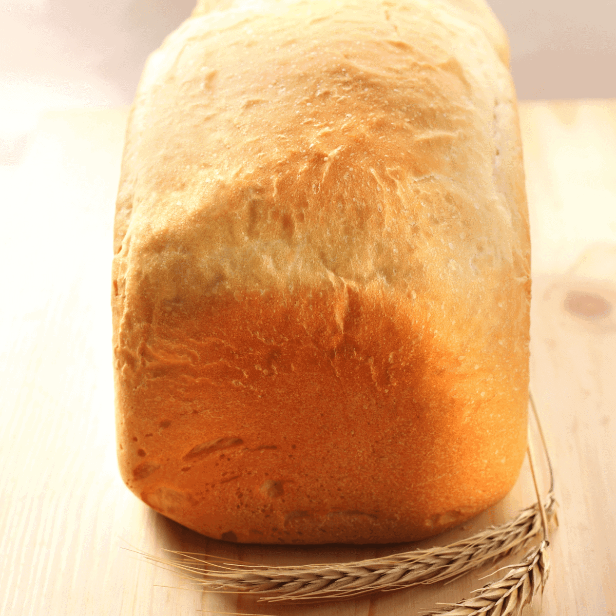 Fresh loaf of whole wheat bread with real wheat laying beside it