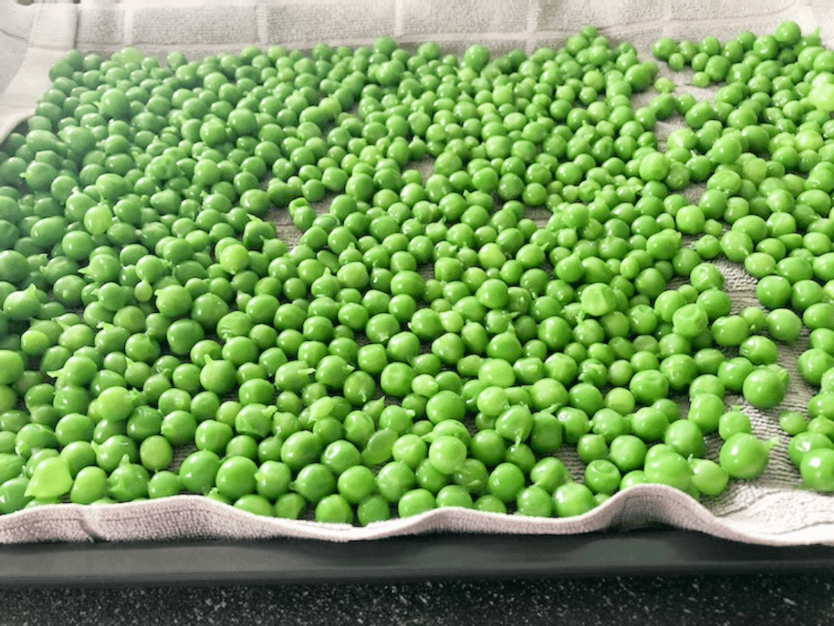 Blanched peas placed on a cookie sheet on a towel on a baking tray to be placed in the freezer to freeze peas individually