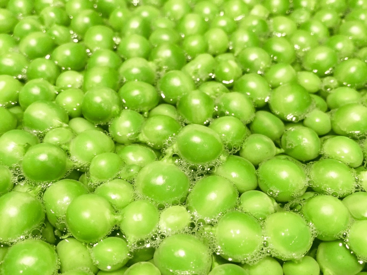 Blanched peas cooling off in ice-cold water to stop the cooking process